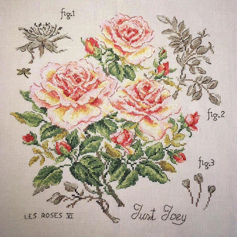 Lucas-S Etude with Roses